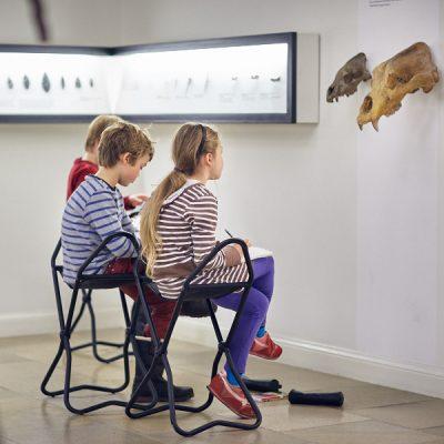 Urtiere und Meereswesen II – Zeichnen im Landesmuseum für Vorgeschichte