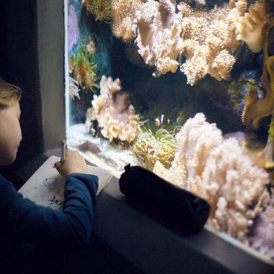 Urtiere und Meereswesen II – Zeichnen im Meeresaquarium