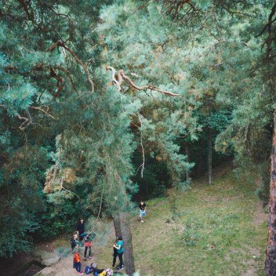 Wunderland Wald I – Im Wald