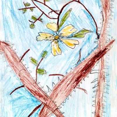 Fantasieren mit Pflanzen und Tieren III – Zeichnung Rike