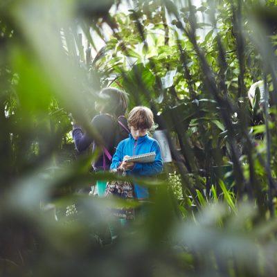 Fantasieren mit Pflanzen und Tieren II – Tropenhaus