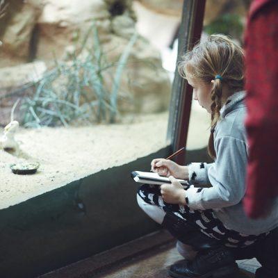 Fantasieren mit Pflanzen und Tieren I – Zeichnen im Zoo
