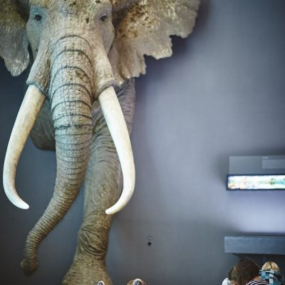 Fantasieren mit Pflanzen und Tieren I – Vor dem großen Elefanten