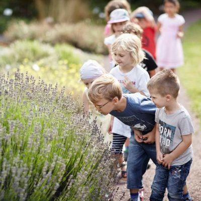Sommer Sonne Garten III – Lavendel