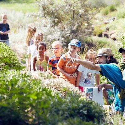 Sommer Sonne Garten II – Eidechsen beobachten