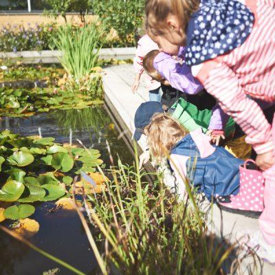 Sommer Sonne Garten – Am Seerosenteich