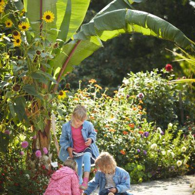 Sommer Sonne Garten – Blütenpracht unter der Palme