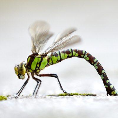 Wunderland Wald I – Libelle