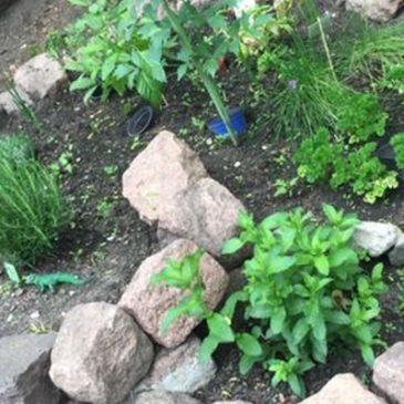 """6 Monate """"QuerBeet"""" im Labyrinth – Dank an unsere Gärtner"""